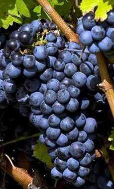 Garden State Wine Growers Association - New Jersey Wines...get your wine passport!