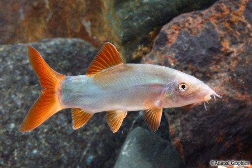 Pin On Fish Tanks Freshwater Fish
