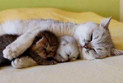 Mama cat with her kittens