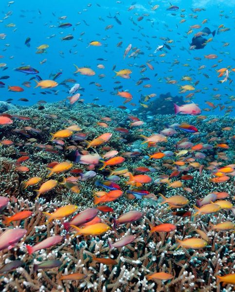 Diving the Great Barrier Reef: 15 Breathtaking Photos: