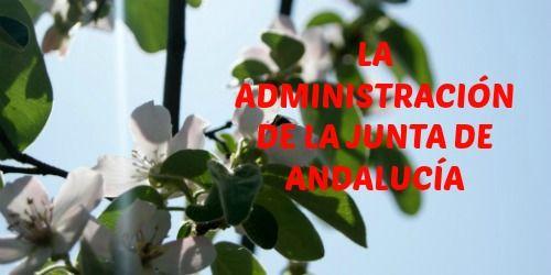 ORGANIZACIÓN ADMINISTRATIVA DE LA JUNTA DE ANDALUCÍA