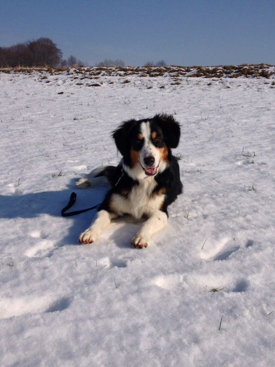 Mischling Mina Ein Hund ist ein Herz auf vier Pfoten! ❤️ #Hund: Mina / #Rasse: Mischling      Mehr Fotos: https://magazin.dogs-2-love.com/foto/mischling-mina/ Foto, Hund, Liebe