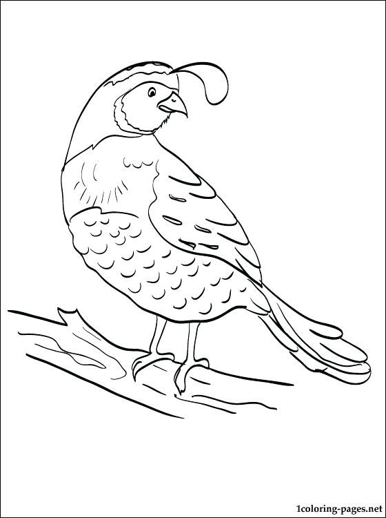 Image Result For Moses Manna Coloring Pages Coloring Pages For Kids Bird Coloring Pages