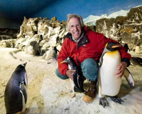 The Fonz with a penguin...Heyyyyy: Penguin Heyyyyy, Animals Penguins, Celebs W Animals, Emperor Penguins, Senior Discounts