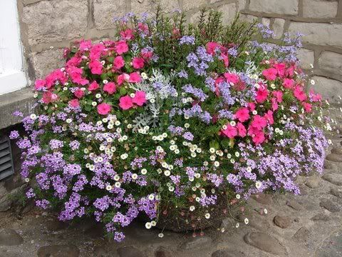 Flower combinations for container gardens verbena erigeron impatiens and the pale blue flower - Best flower combinations for containers ...