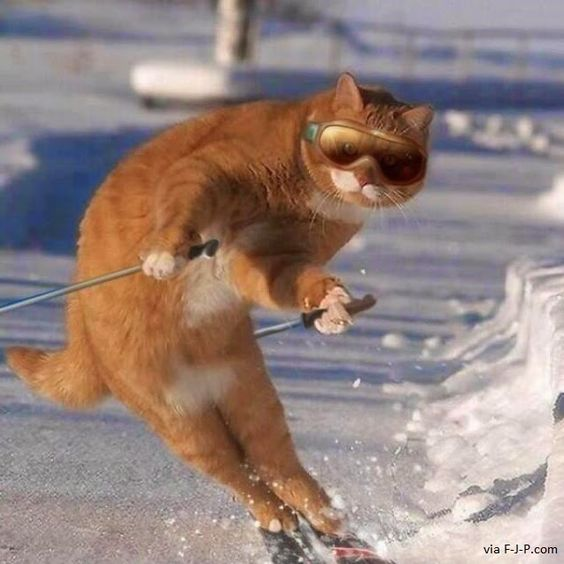 Funny Skiing Cat Photo