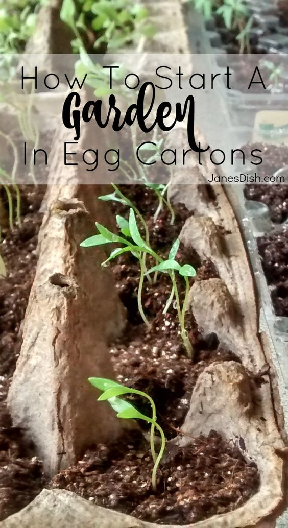 HOW TO START A GARDEN IN EGG CARTONS! Do you want to start a vegetable garden, but don't want to make any major investment in time or money until you actually grow something? Egg carton seed starters are the perfect solution for you!