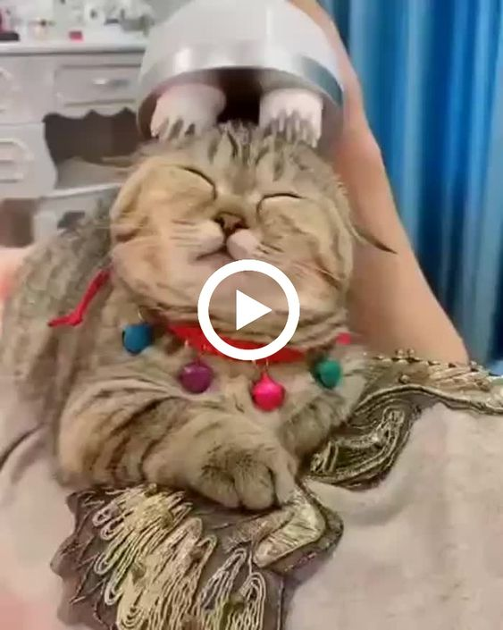 Nessa hora eu também quero ser um gato