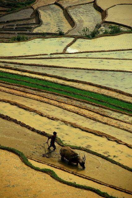 Vietnamese Rice Terraces. Photographer?