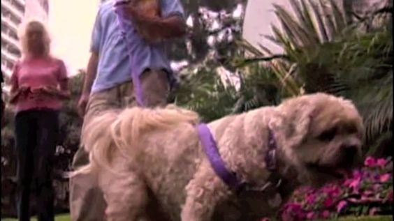 Another great Cesar Millan video on how to stop your dog's toy and food aggression and Cesar shows you how he goes about stopping your dog from showing these signs of aggression which nobody wants from their dog