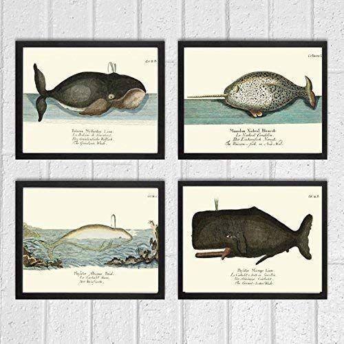 WHALE ANTIQUE ANIMAL ILLUSTRATION ART PRINT Diagram Home Decor Wall Picture