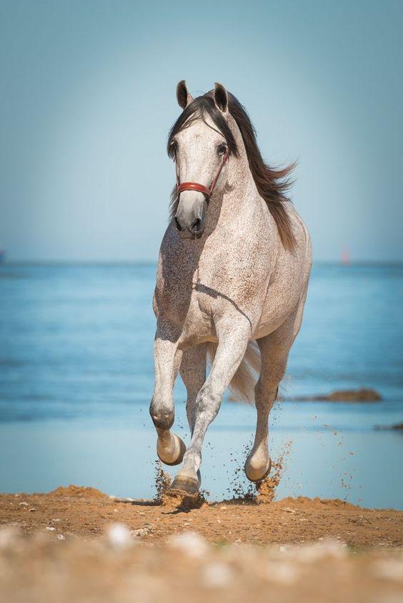 scarlettjane22:    Pferdefotografie & Hundefotografie-Einzigartige Pferdefotos    Found on brphotographs.de