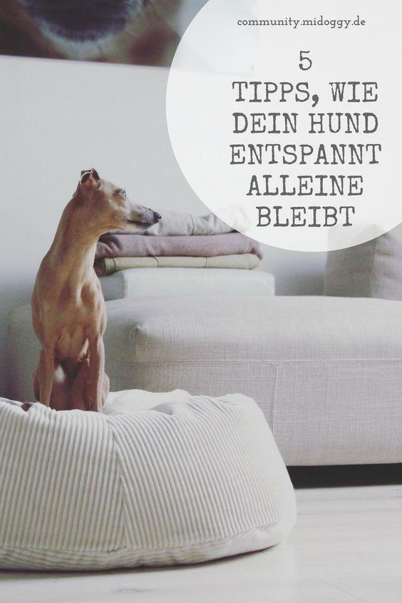 Hund Allein Daheim So Entspannt Geht S Anzeige Hunde