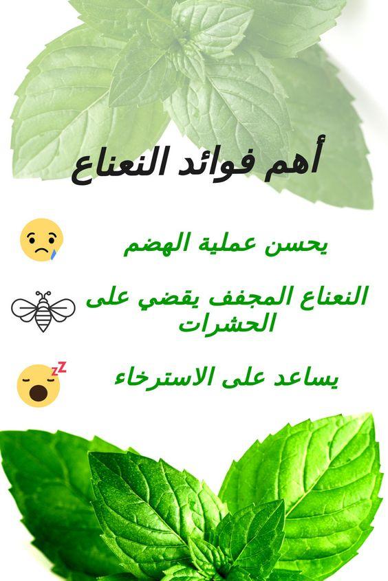 أهم فوائد النعناع Plant Leaves Medical Advice Plants