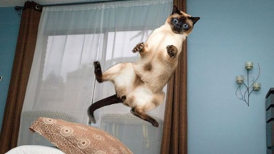 31 απίστευτες φωτογραφίες που δείχνουν πόσο αστείες είναι οι γάτες (Μέρος 2ο)