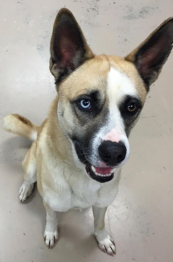 HAYDEN is an adoptable Husky searching for a forever family near Wilmington, OH. Use Petfinder to find adoptable pets in your area.