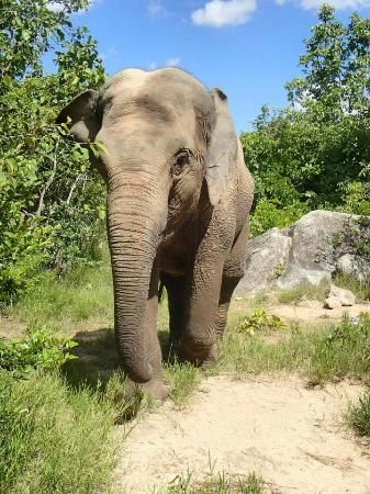 Join our tour to join Lucky on her afternoon walk in the forest