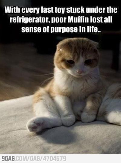 Poor muffin..: Funny Cat, Funny Picture, Funny Stuff, Poor Kitty, Crazy Cat, Funny Animal, Poor Muffin, Poor Baby, Cat Lady