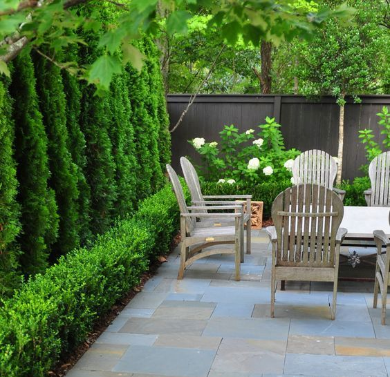 Courtyard Gardens Design, Tall Potted Plants Patio Privacy Nz