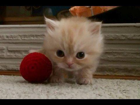 Vidéo de chat et vidéo de chaton - Wamiz