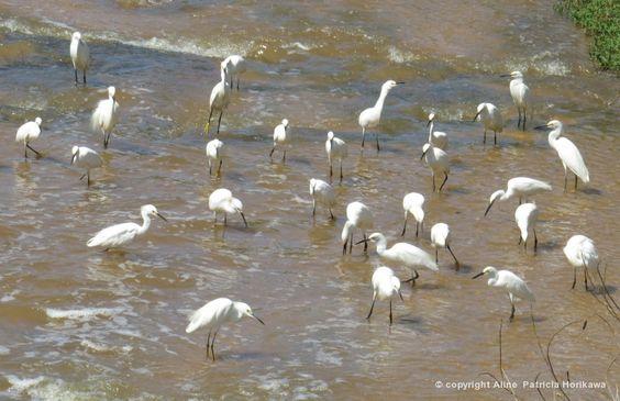Biofaces - Bring Nature Closer