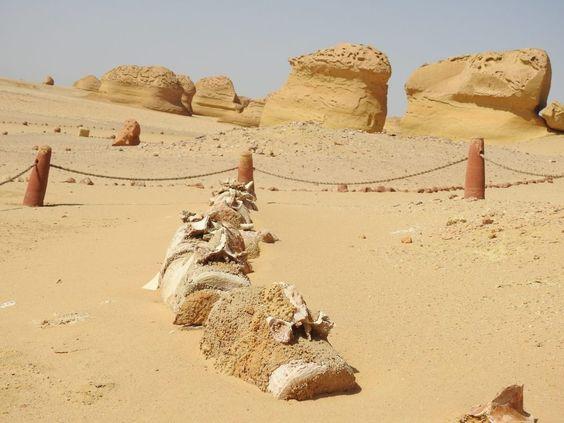 Er is een vallei van walvissen in het midden van de woestijn van Egypte en zijn miljoenen jaren oud