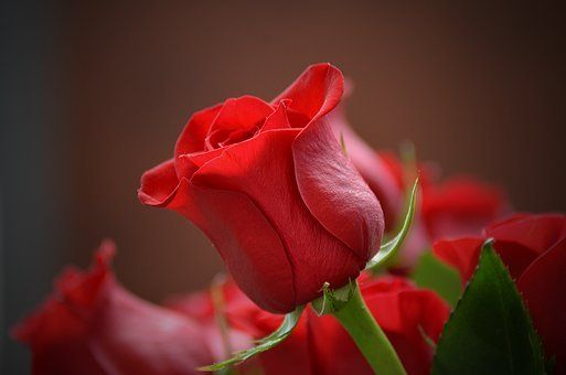 Awesome Love Red Rose Flower Pic Hd And Review Beautiful Rose Flowers Pretty Flowers Beautiful Flowers