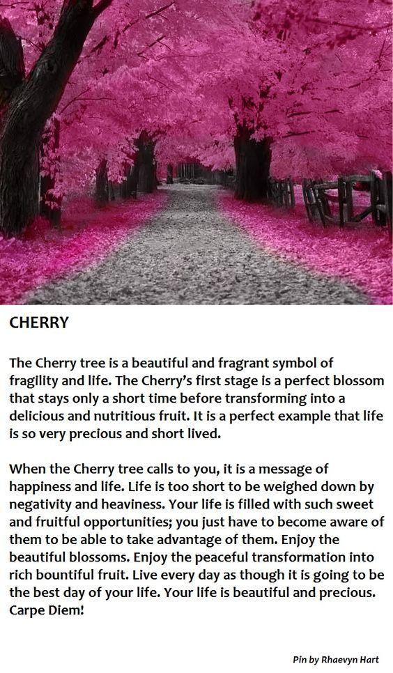 Tree Lore Cherry Cherry Tree Tree Blossom
