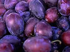 Winemaking Recipe for Plum Wine, How To Make Plum Wine: Wine Making Guides