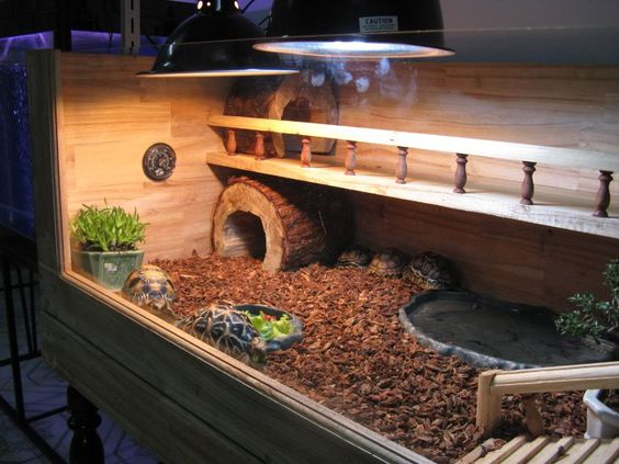 Russian tortoise cage - I love this one!