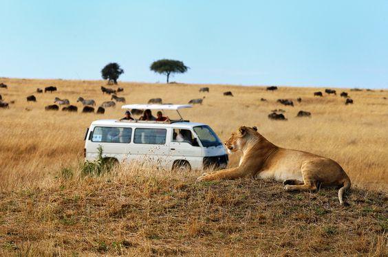 #ViajesInnolvidablesParaElVerano - Safari en África