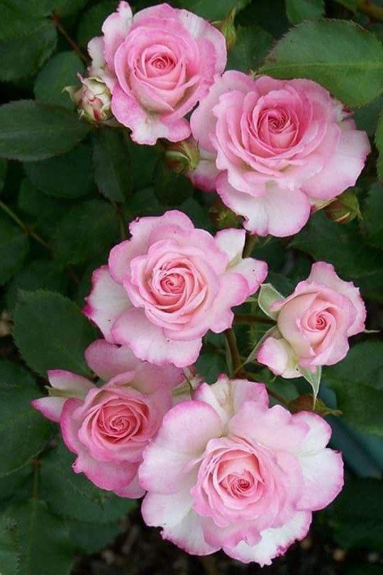 Pin De Teresa Cristina Cotrim Pereira Em Flores Com Imagens