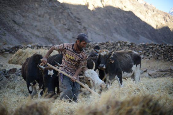 Deuxième village, vallée de Geisev, Bartang, Pamir, Tadjikistan.