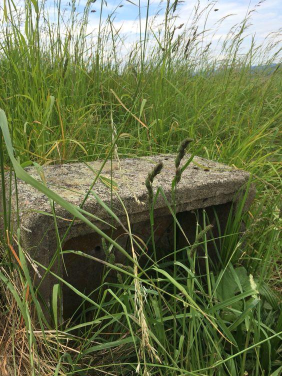 Überreste von Installationen am Rand des Hauptwegs Bückeberg Reichserntedankfest Hagenohsen