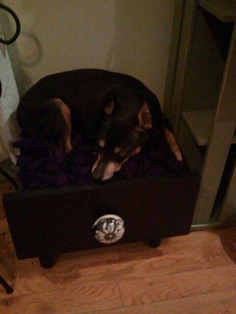 Drawer pet bed