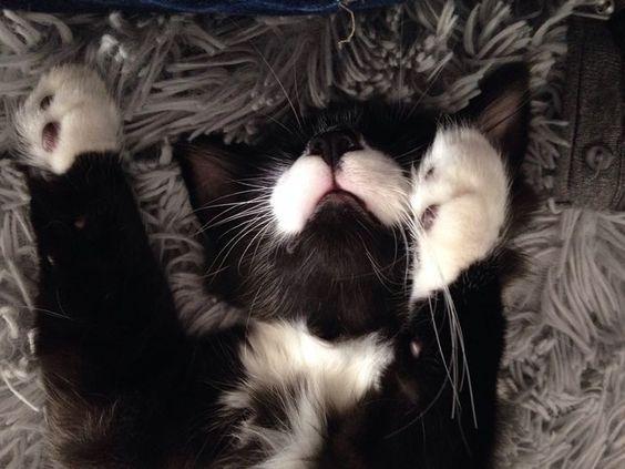 Nap time #yummypets #european #cat #kitten