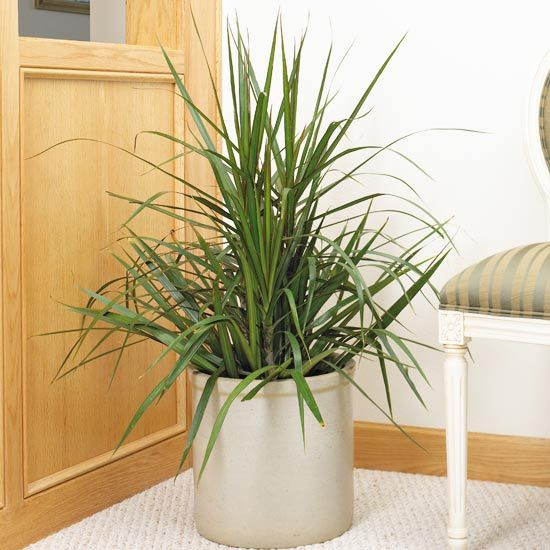 Houseplant plants and green leaves on pinterest Tall narrow indoor plants