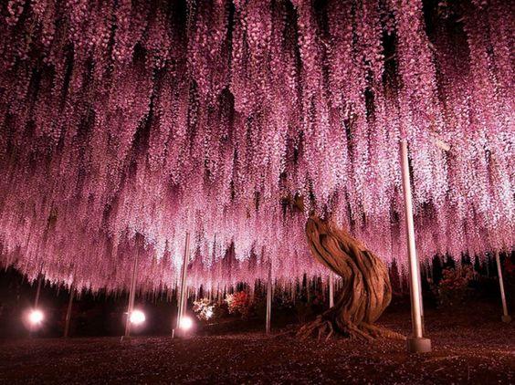 Besto of Web As 16 árvores mais lindas do mundo