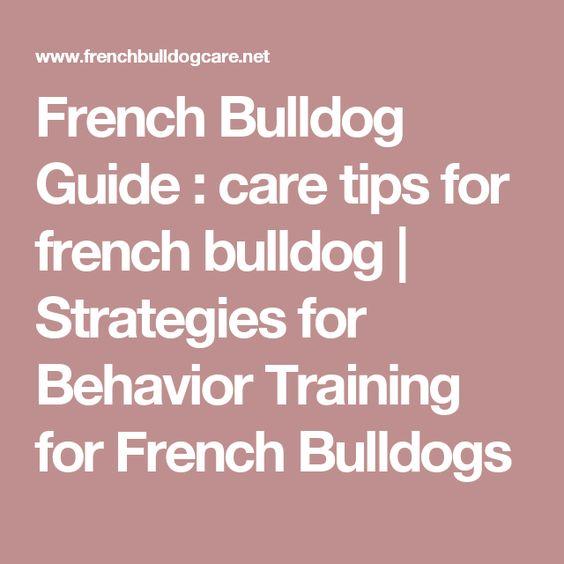 French bulldog care guide