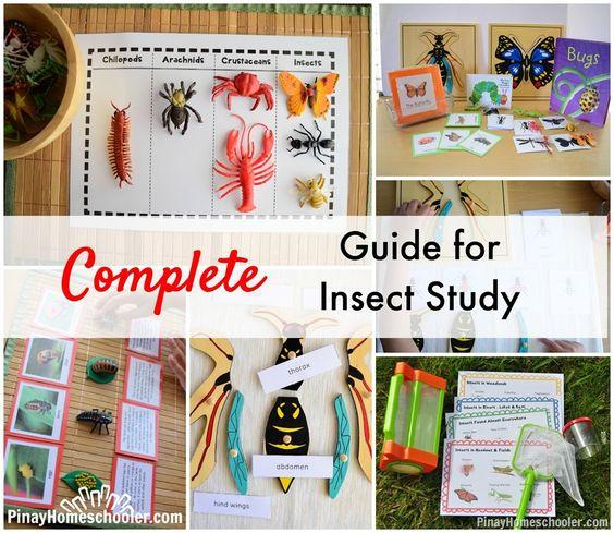 Entomology - Study.com