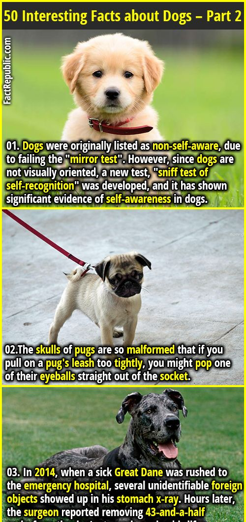 50 Interesting Facts About Dogs Part 2 Dog Facts Animal Facts