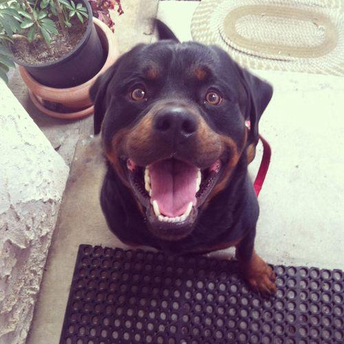 Smiling Dogge