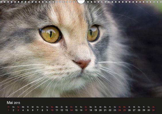 K A T Z E N das Glück hat 4 Pfoten - CALVENDO Kalender - #katzen #katzenkalender