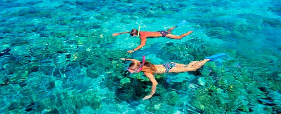 Top Florida Snorkeling Spots XperienceFloridaMarine Pinterest - The snorkeling guide to florida 10 spots for underwater exploring