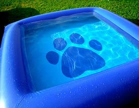 The Ultimate Dog Pool , Inflatable pools for dogs   PURCHASE