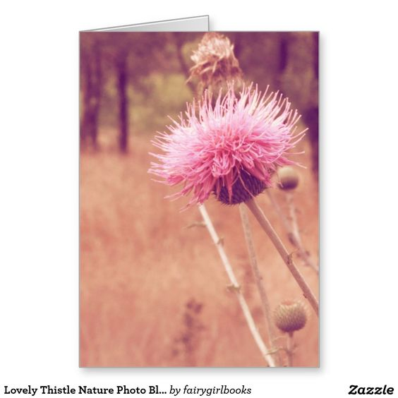 Lovely Thistle Nature Photo Blank Inside Greeting Card