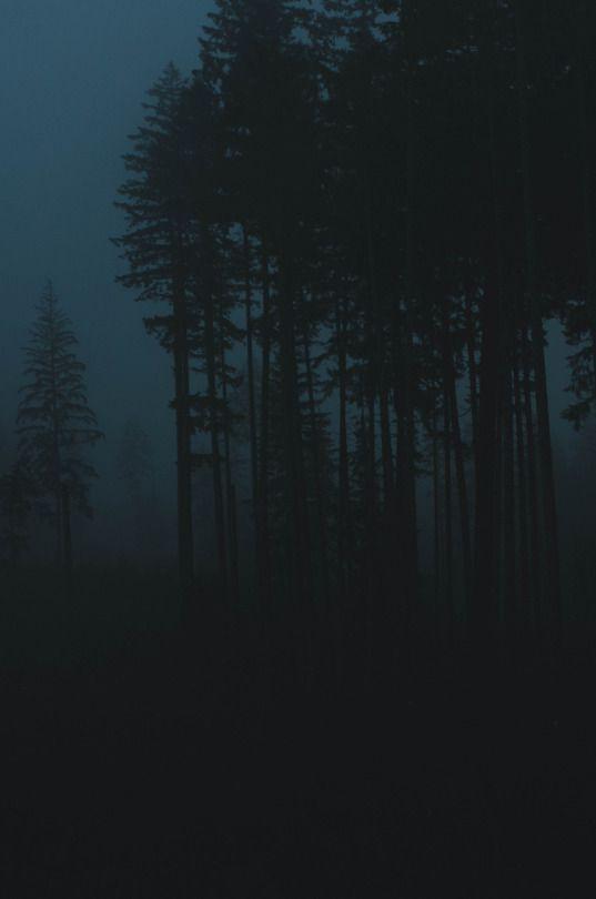 Milli Vedder Photography Dark Landscape Dark Photography Night Forest