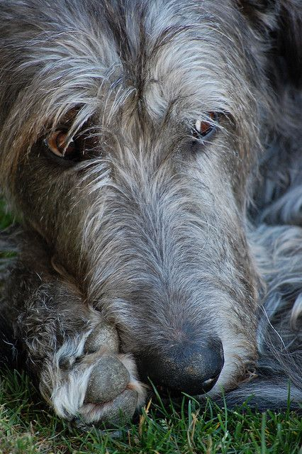 Connery, deep in thought by Jenya Campbell, via Flickr