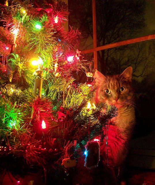 Christmas kittens Christmas Cuties Pinterest Cats, Kittens and