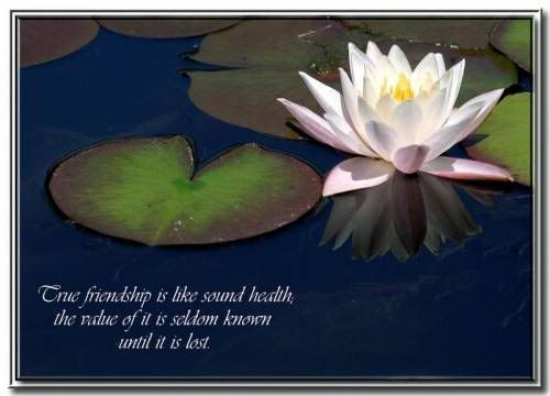 Spiritual Quotes About Friendship 17 (500×360)   Truth   Pinterest    Friendship, Spiritual And Truths